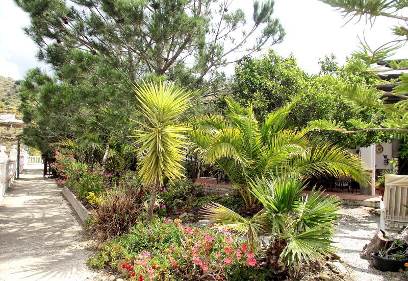 Garden with palms and pines and lots of flowers